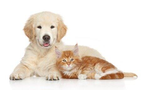 Professional Pet Odor Removal Richmond VA